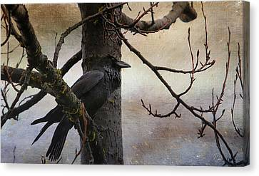 Consider The Raven Canvas Print by Perri Kelly