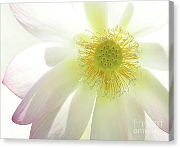 Cool Lotus Canvas Print by Sabrina L Ryan