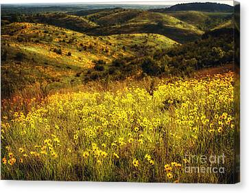 Coreopsis In The Arbuckles Canvas Print by Tamyra Ayles