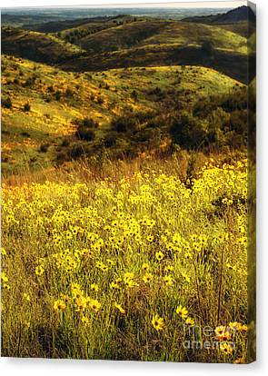 Coreopsis In The Arbuckles, Vertical Canvas Print by Tamyra Ayles