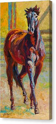 Corral Boss - Mustang Canvas Print by Marion Rose