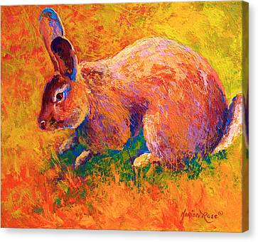 Cottontail I Canvas Print by Marion Rose