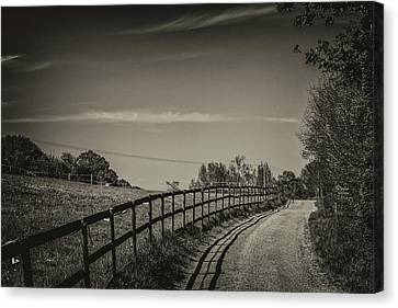 Country Path Canvas Print by Martin Newman