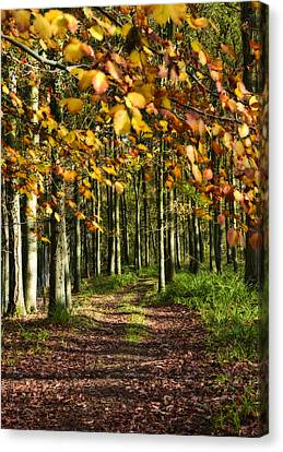 Country Road Canvas Print by Svetlana Sewell