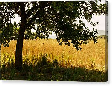 Countryside Of Italy  Canvas Print by Andrea Mazzocchetti