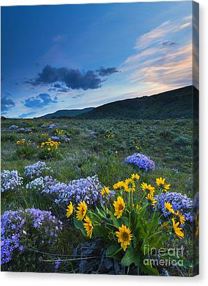 Cowiche Spring Sunset Canvas Print by Mike Dawson