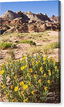 Coyote Buttes Mule's Ear Canvas Print by Greg Clure