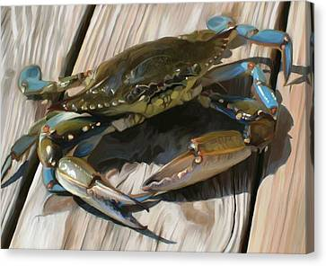 Crabbie Canvas Print by Patti Siehien
