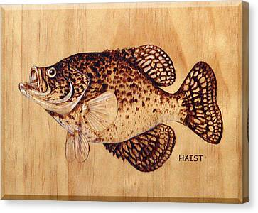 Crappie Canvas Print by Ron Haist