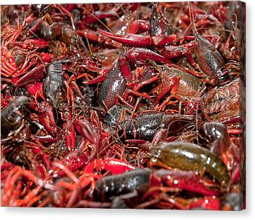Crawfish Canvas Print by Jim DeLillo