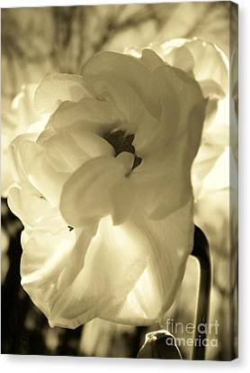 Cream Canvas Print by Sally Siko