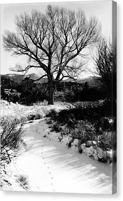 Creekside Winter Canvas Print by Allan McConnell