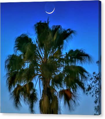 Crescent Over Palm Canvas Print by Marvin Spates