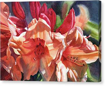 Crimson And Bronze Rhododendron Canvas Print by Sharon Freeman