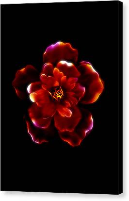 Crimson Bloom Canvas Print by Dolly Mohr