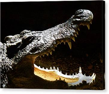 Crocodile Canvas Print by Scott Hovind