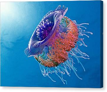 Crown Jellyfish Canvas Print by Henry Jager