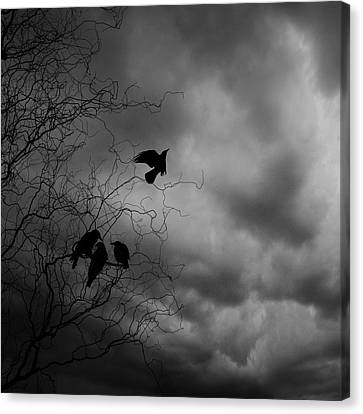 Crows Canvas Print by Cambion Art