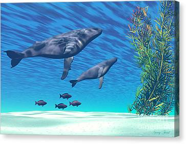 Crystal Clear Canvas Print by Corey Ford