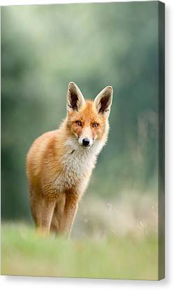 Curious Fox Canvas Print by Roeselien Raimond