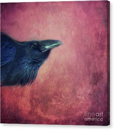 Curiosity Canvas Print by Priska Wettstein