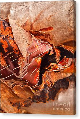 Curled Bark Canvas Print by Tara Turner