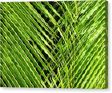 Curly Palm Tree Leaves Canvas Print by Victoria Schaal
