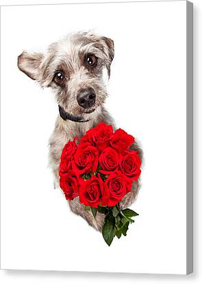 Cute Dog With Dozen Red Roses Canvas Print by Susan Schmitz