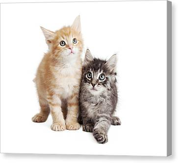 Cute Orange And Black Tabby Kittens Together Canvas Print by Susan Schmitz