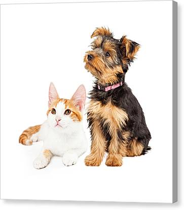 Cute Puppy And Kitten Sitting To Side  Canvas Print by Susan  Schmitz