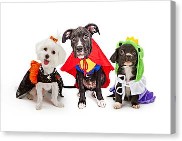 Cute Puppy Dogs Wearing Halloween Costumes Canvas Print by Susan Schmitz