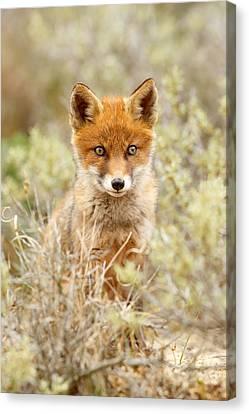 Cute Red Fox Kit Canvas Print by Roeselien Raimond