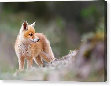 Cute Red Fox Canvas Print by Roeselien Raimond