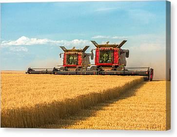 Cutting Wheat Canvas Print by Todd Klassy