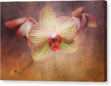 Cymbidium Orchid Canvas Print by Tom Mc Nemar