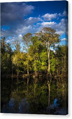 Cypress And Oaks Canvas Print by Marvin Spates