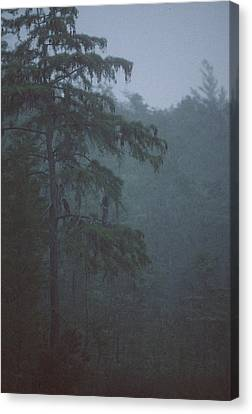 Cypress Swamp Canvas Print by Kimberly Mohlenhoff