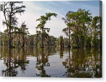 Cypress Trees And Spanish Moss In Lake Martin Canvas Print by Louise Heusinkveld