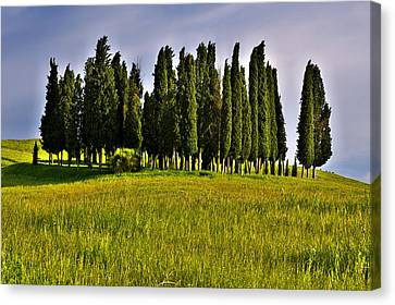 Cypress Trees Canvas Print by Ivan Slosar