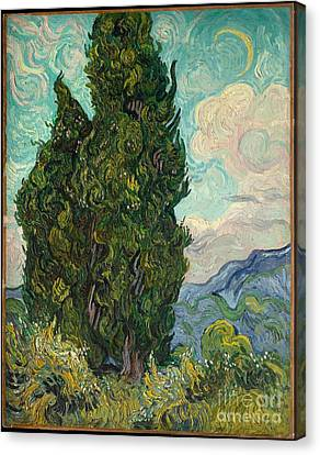 Cypresses  Canvas Print by Celestial Images