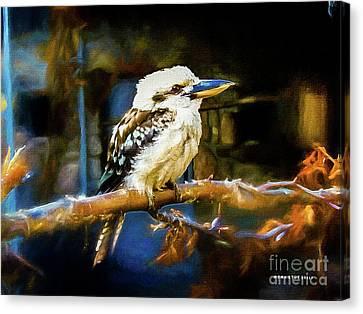 Dacelo Novaeguineae Kookaburra Canvas Print by Mona Stut