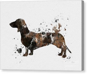 Dachshund Canvas Print by Rebecca Jenkins