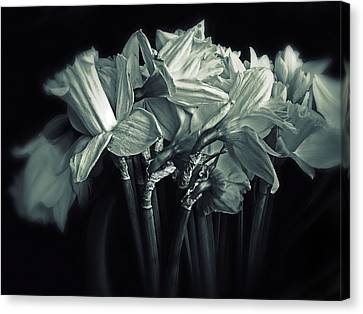 Daffodil Duotone Canvas Print by Jessica Jenney