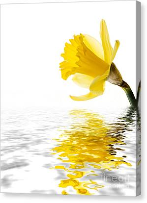 Daffodil Reflected Canvas Print by Jane Rix