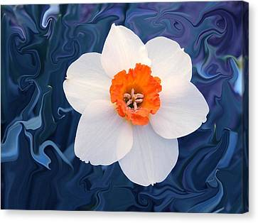 Daffodill In Blue Canvas Print by Jim  Darnall
