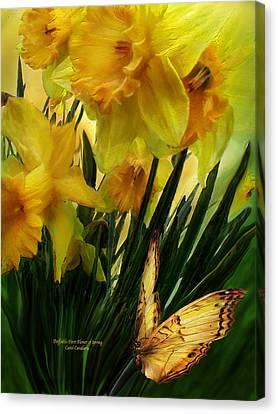 Daffodils - First Flower Of Spring Canvas Print by Carol Cavalaris