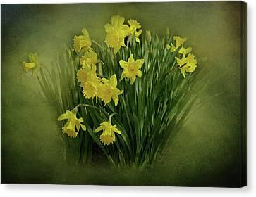 Daffodils Canvas Print by Sandy Keeton