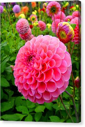 Flowers Canvas Print featuring the photograph Dahlia by Roberto Alamino