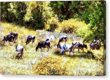 Dairy Cows In A Summer Pasture Canvas Print by Janine Riley