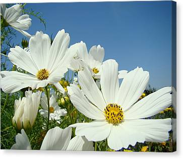 Daisies Flowers Art Prints White Daisy Flower Gardens Canvas Print by Baslee Troutman